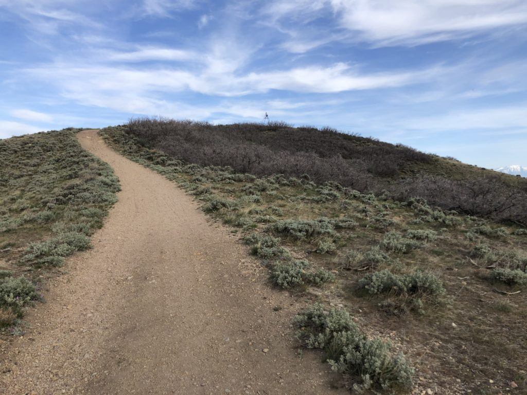 Trail up to the summit of View Benchmark